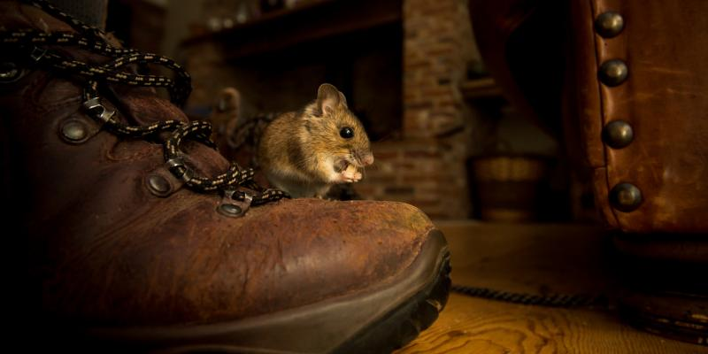 mouse in home next to boot