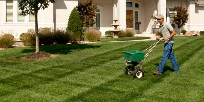 beautiful lawn in front of house